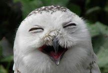 Cute bird pics