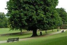:Trees UK: