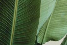 pinteresting green / plants