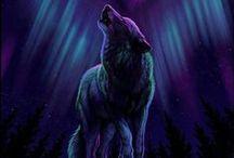 Wolf & Werewolf