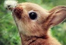conigli & co . / coniglietti teneri e adorabili
