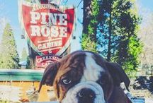 Pack Your Pet: Pet Friendly Cabins / Arrowhead Pine Rose Cabins is a pet friendly resort in the Lake Arrowhead Communities in Southern California.  We love our four footed friends, so bring Fido!