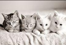Cats!! =^.^=❤