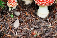 Mushrooms / Mushrooms have so many cool looking varieties!