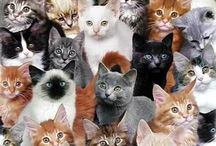 Best collection of CAT pictures you've ever seen / What we all love: CATS