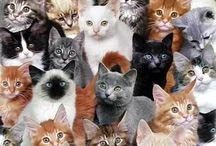 De ultieme kattenplaatjesverzameling aller tijden / What we all love: CATS