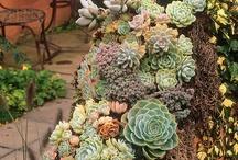 Garden & Decor