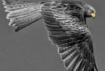 Collect-Birds! / All birds! / by Roxanne Buchanan