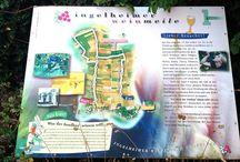 Ingelheimer Weinmeile -(Ingelheim wine Mile) / Walk through the Vineyards
