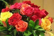 güller ve karanfiller / güller