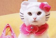 Fashion for Cats