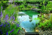 Gardening & Landscaping Ideas / Inspirational gardens, landscapes & garden  sculptures. Emphasis on water features, low maintenance, drought tolerant plants and decorative kitchen herbs.  / by S F