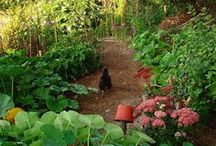 Chickens and Gardens / Great tips on how to ensure your garden and your backyard chickens can co-exist.
