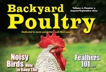 Backyard Poultry Covers / The beautiful, chicken-filled covers from Backyard Poultry Magazine