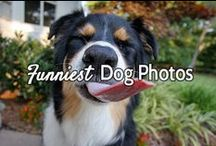 Funniest Dog Photos / Guaranteed to make you laugh out loud! -- Courtesy of www.canoozlepets.com