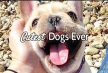 """Cutest Dogs Ever / This board is guaranteed to make you say """"awwwww"""" at least once! Courtesy of Pawstruck.com"""