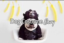 Dog Costume Envy / It's not only during October where owners get to dress their dogs up! Start brainstorming ideas for your pet's costume. Enjoy courtesy of Pawstruck.com