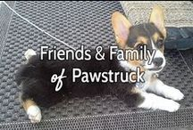 Friends & Family of Pawstruck.com / These adorable puppies will put a smile on your face. Satisfaction guaranteed! -- Courtesy of www.pawstruck.com and our amazing Instagram followers. Follow us on Instagram: @pawstruckpets or visit our page at www.instagram.com/pawstruckpets