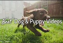 Best Dog & Puppy Videos / On this board you'll find the best dog related videos. Whether they're funny, cute, or completely off the wall, they're guaranteed to be awesome. Enjoy! -- Courtesy of www.canoozlepets.com