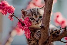 Cats !! ^_^
