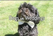 Dogs in Weddings / A grouping of the most creative and beautiful ways of including your dog in your wedding.