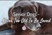 """Senior Dogs - Never Too Old To Be Loved / """"My face may be white, but my heart is pure gold. there is no shame in growing old."""""""