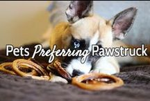 Pets Preferring Pawstruck / Customer submitted photos of their pets loving Pawstruck products, testimonial photos, and more information on Pawstruck items. Feel free to submit photos of your pets loving Pawstruck!