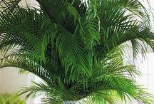 |  t r o p i c a l  | / Tropical-styled interiors. Sarah x