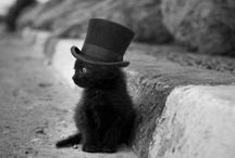 Black Cats / Black cats. Cats-eyes. Cats noir. Ahhhhh...happiness. Sarah x