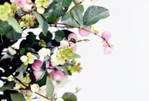 + leaves & petals + / by brittany reiff