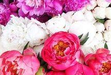 | Flower Power | / by | Modest Maintenance |