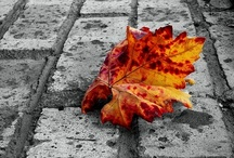 Autumn / by L D