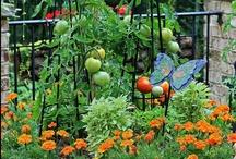 Garden Ideas / by Brooke Aker