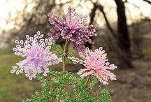 мои бисерные деревья / здесь представлены мои деревья и цветы из бисера