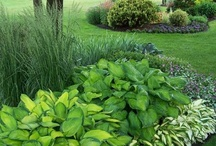 Yard, Garden & Outdoor Living / by Amy Duncan