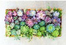 Plants & Lovelies