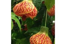 Unusual plants and flowers / Weird, strange and unusually cool plants!
