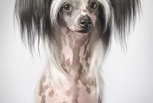 Dog things / Dogs, chinese crested dog, decorations