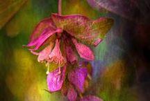 Paintings  :  Flowers/Nature