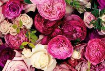 FLOWER BACKGROUNDS / Pink flower