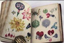 Libros viejos / Old books / Los libros viejos nos apasionan. Olor a papel, impresiones y encuadernaciones de otras épocas, ilustraciones fabulosas