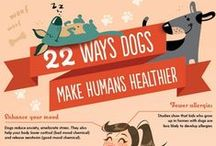 dog tips & tricks. / Great ideas and inspiration on all things D.O.G.