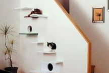 architecture for animals. / Get inspired to make your pet a big part of your home with animal inspired architecture.