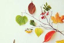 Autumn mood / Høststemning