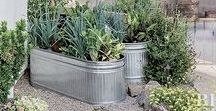 Container Gardening / Interesting ways to create and design container gardens. From flowers to herbs to vegetables
