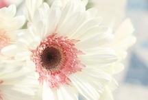 ❥ Blooms