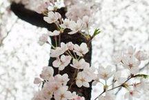 ❥ Spring
