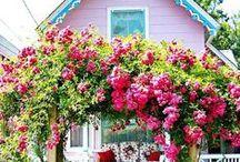 ❥ Rose Cottage