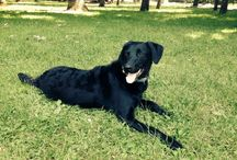 Tóbi the Dog / Dog,play,swim,run,community,mix dog,tóbiás,rescue dog,shelter,puppy,animal,funny,enjoy