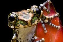 Amphibia / Beatiful Animals